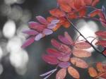 牦牛坪:从秋天尽头出发圆梦在阳光路上! - 文化厅