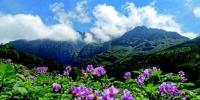 2020年6月,李子沟村的洋芋花海。 - 云南频道